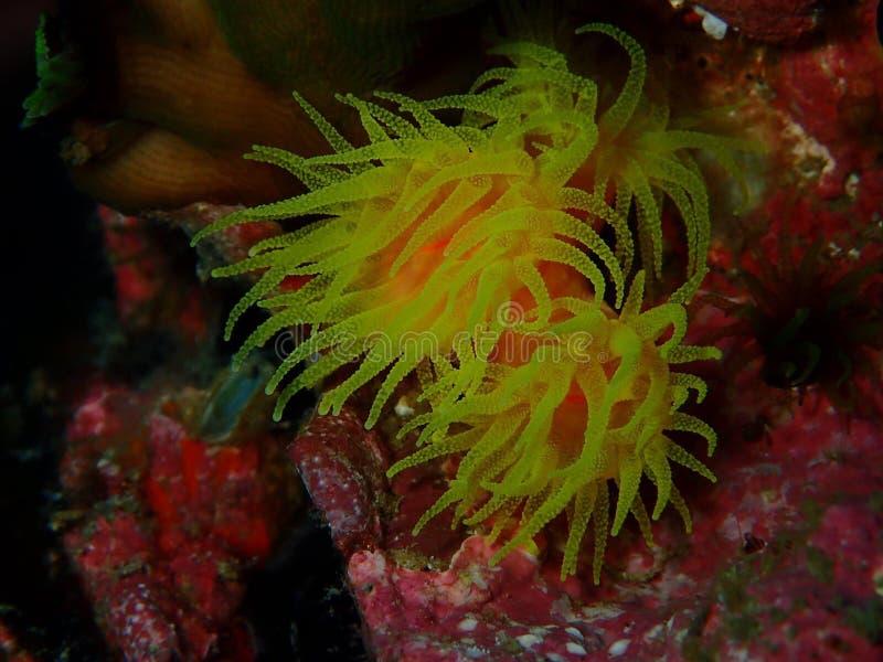 Flores do mar imagens de stock royalty free