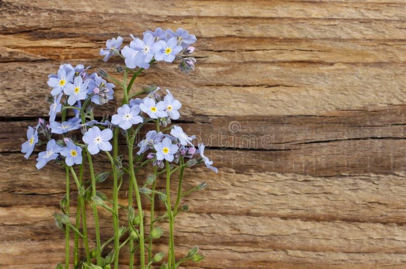Flores do miosótis no fundo de madeira fotografia de stock royalty free