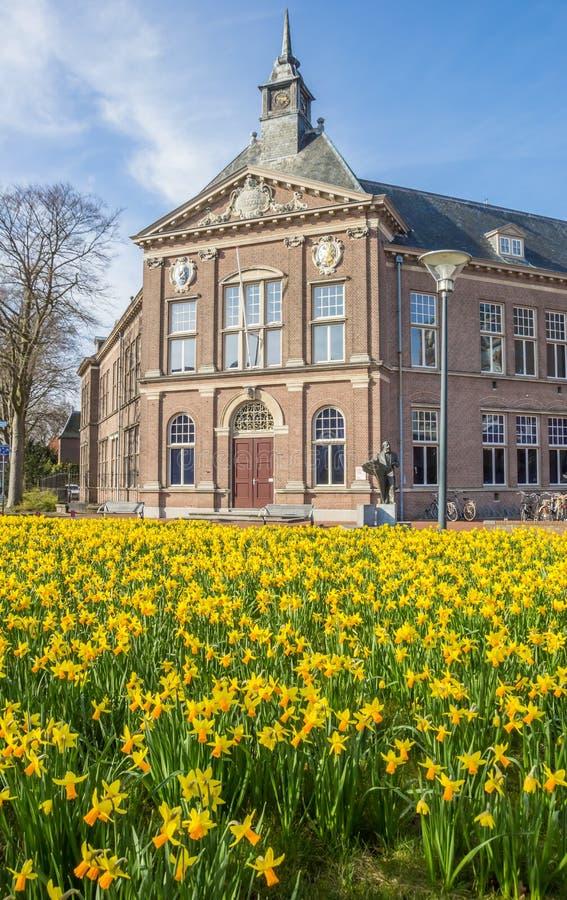 Flores do narciso na frente do museu em Veendam fotos de stock
