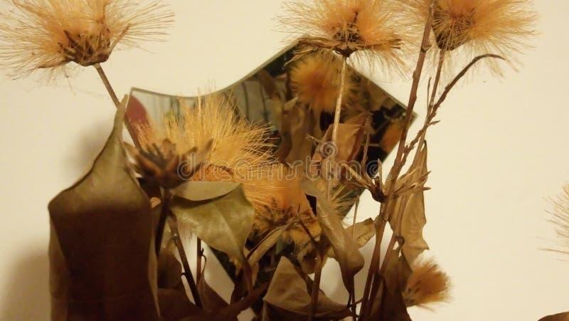 Flores do ocre foto de stock