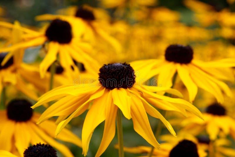 Flores do outono fotografia de stock royalty free