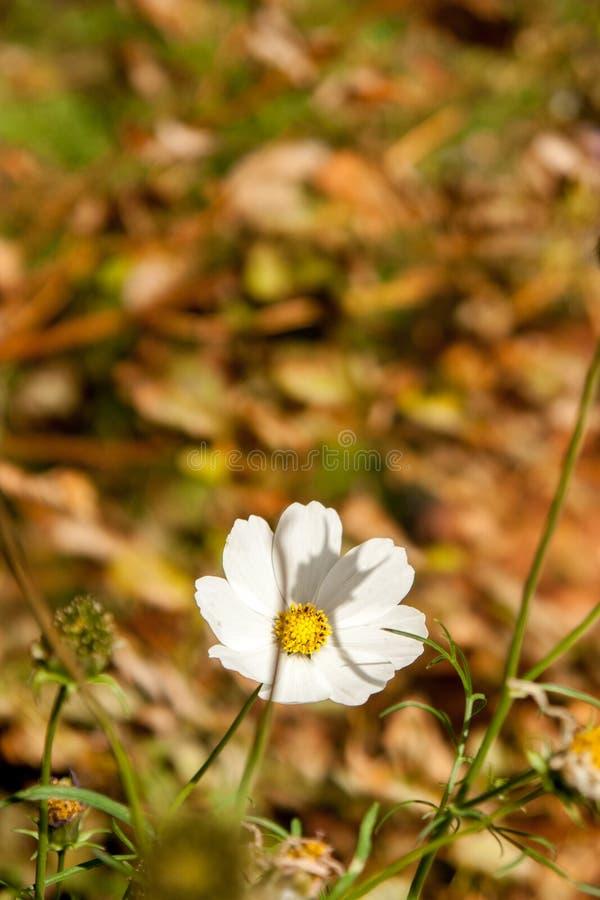Flores do outono no fundo colorido agradável imagens de stock