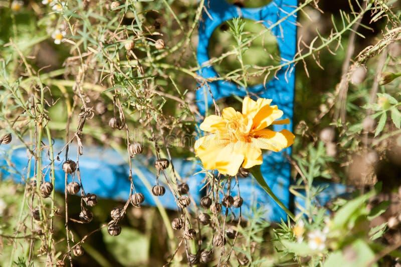 Flores do outono no fundo colorido agradável imagem de stock