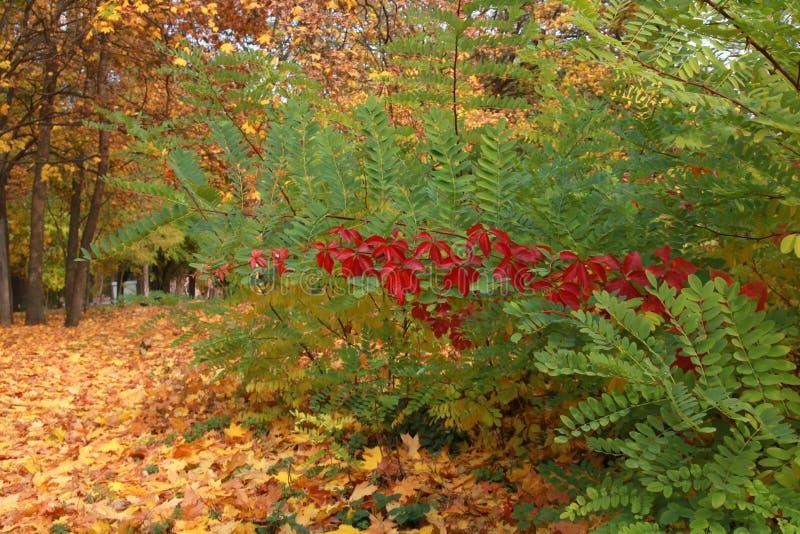 flores do outono nos canteiros de flores imagem de stock
