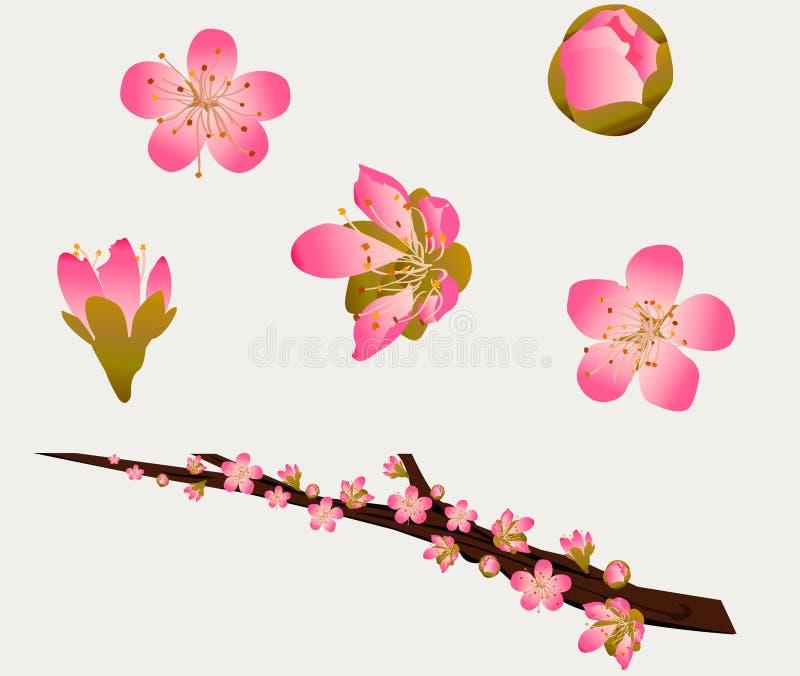 Flores do pêssego ilustração royalty free