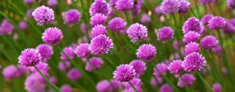 Flores do panorama fotografia de stock
