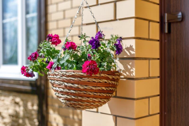 Flores do petúnia em uns potenciômetros de vime contra uma parede de tijolo imagem de stock royalty free