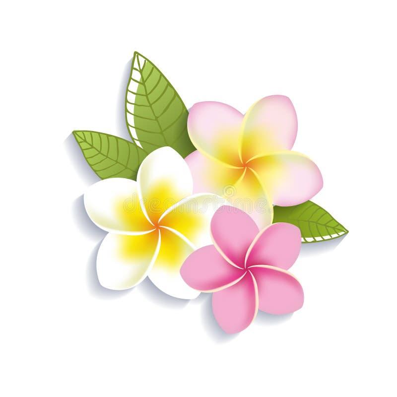 Flores do plumeria do vetor em um fundo branco ilustração stock