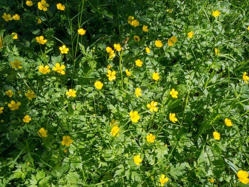 Flores do prado foto de stock royalty free