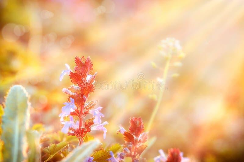 Flores do prado banhadas na luz solar fotografia de stock royalty free