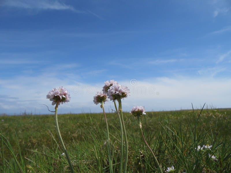Flores do prado contra o céu azul imagem de stock royalty free