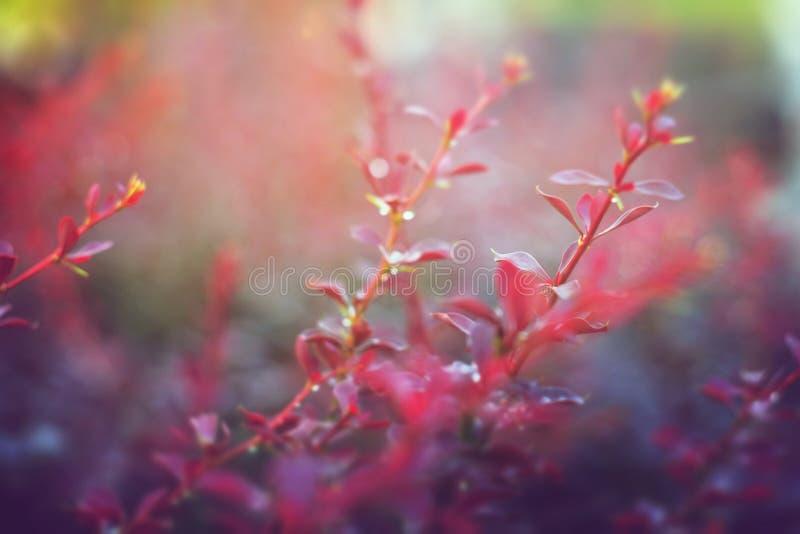 Flores do prado na manhã fresca ensolarada adiantada imagem de stock
