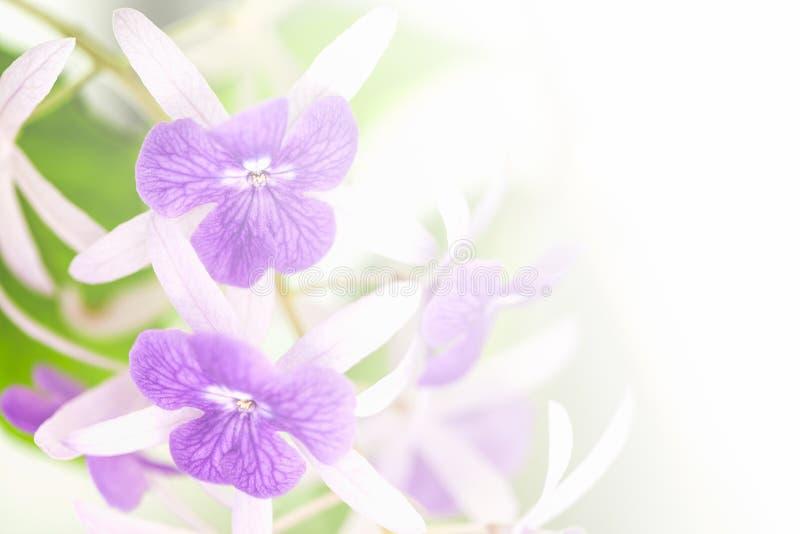 Flores do racemosa de Petrea foto de stock royalty free