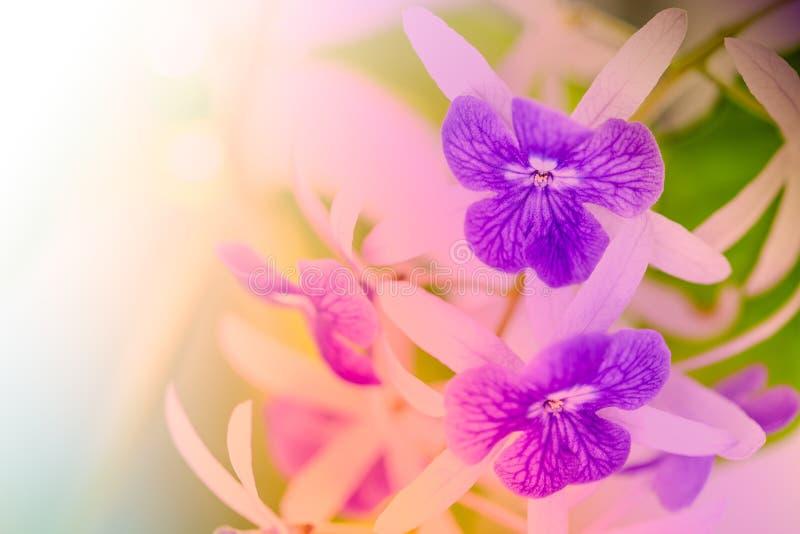 Flores do racemosa de Petrea imagens de stock