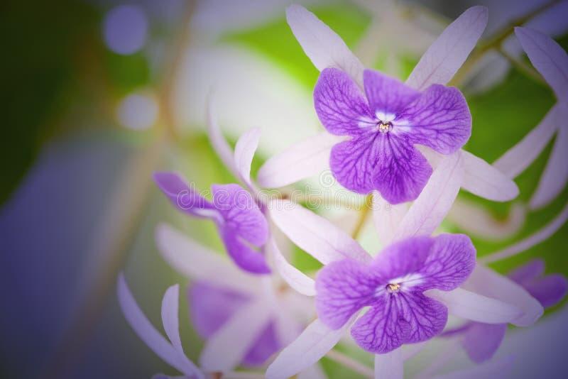 Flores do racemosa de Petrea imagens de stock royalty free