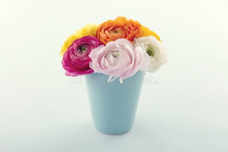 Flores do ranúnculo fotos de stock