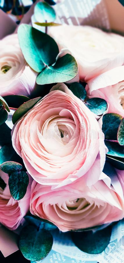 Flores do ranúnculo proximamente Projeto artístico bonito do ramalhete imagem de stock royalty free