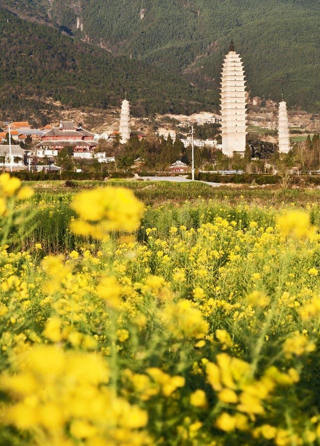 Flores do Rapeseed e os três Pagodas fotos de stock