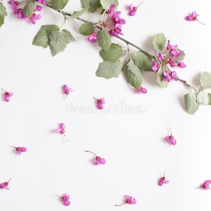 Flores do rosa da mola em um ramo e claro - folhas novas verdes em Livro Branco textured Fundo da mola para o projeto e a decora? fotos de stock