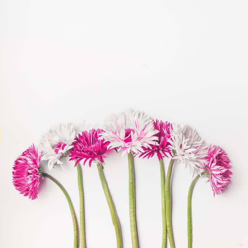 Flores do rosa e as brancas do gerbera da margarida no fundo branco com espaço da cópia, vista superior Grupo das flores imagem de stock