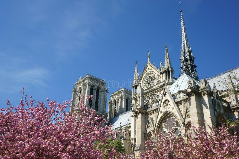 Flores do rosa do galo dos pináculos da catedral do Notre-Dame de Paris fotografia de stock royalty free