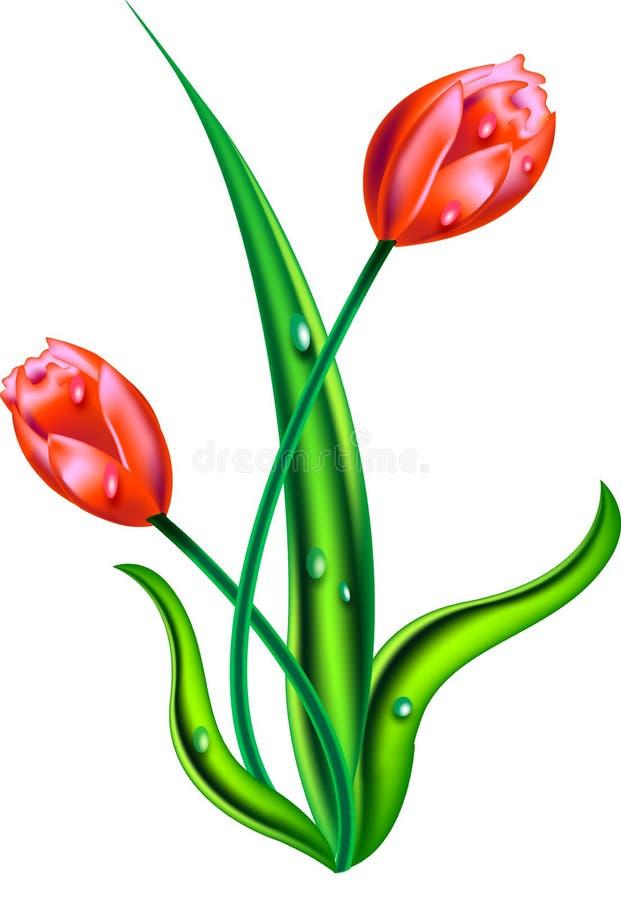 Flores do Tulip ilustração royalty free