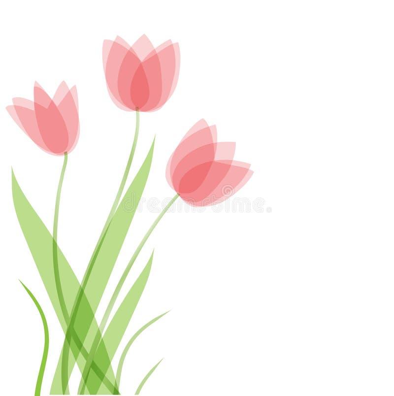 Flores do Tulip. Fundo do vetor ilustração royalty free