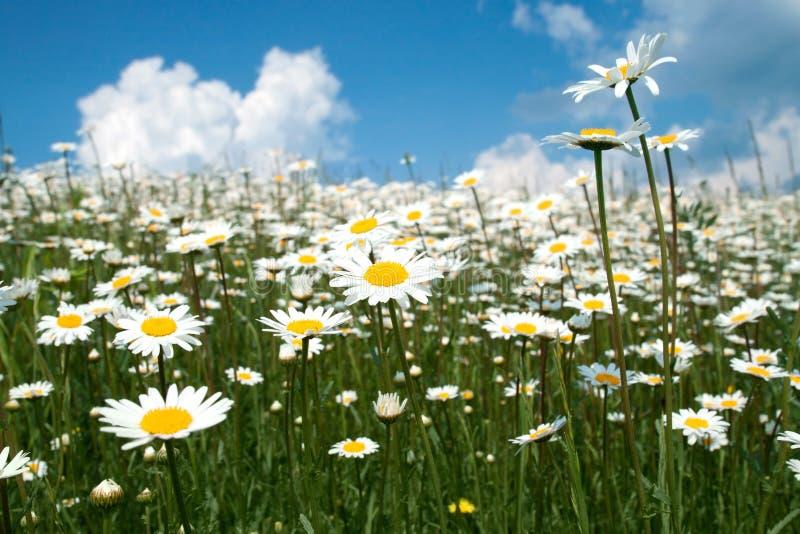 Flores do verão imagem de stock