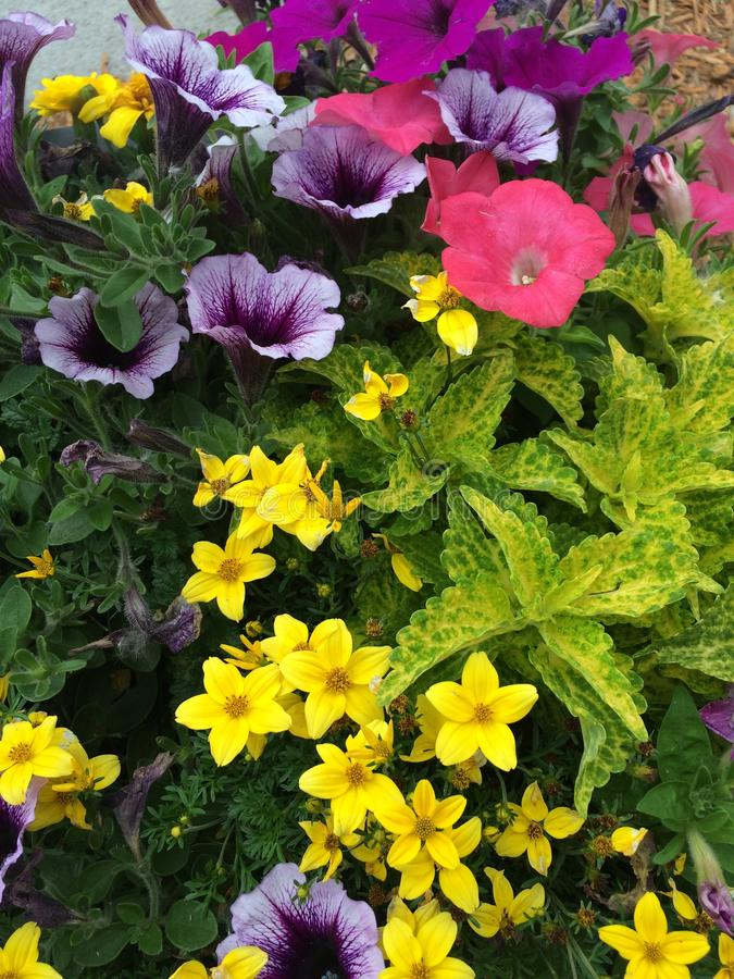 Flores do verão! fotos de stock royalty free