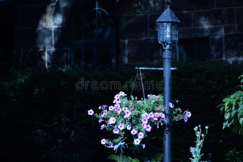 Flores do verão imagens de stock royalty free