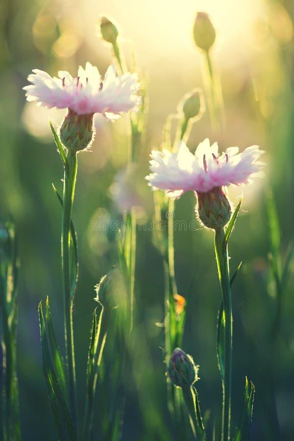 Flores do verão como um fundo fotos de stock royalty free