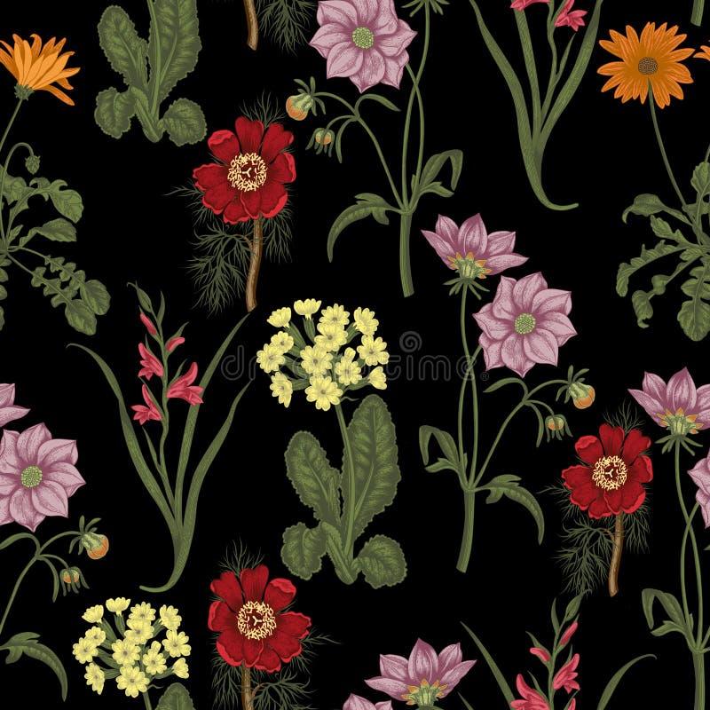 Flores do verão do campo Fundo sem emenda botany Pano, papel de parede flor Textura com teste padrão floral ilustração royalty free