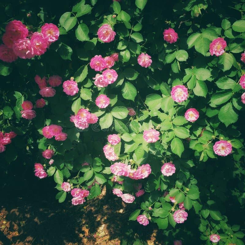 Flores do verão na flor cheia fotos de stock