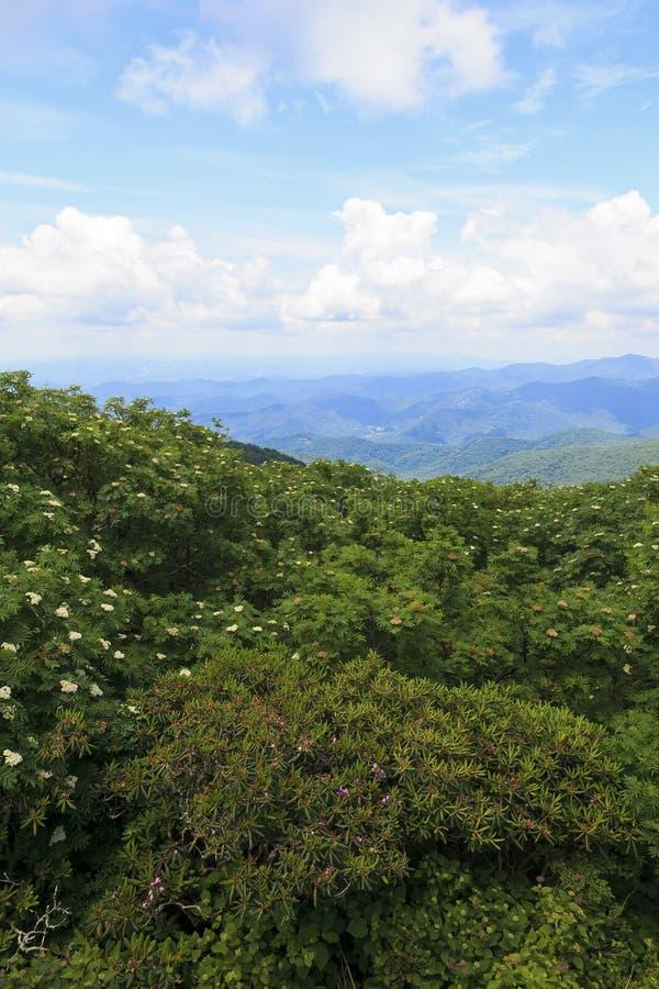 Flores do verão nas montanhas fotografia de stock royalty free