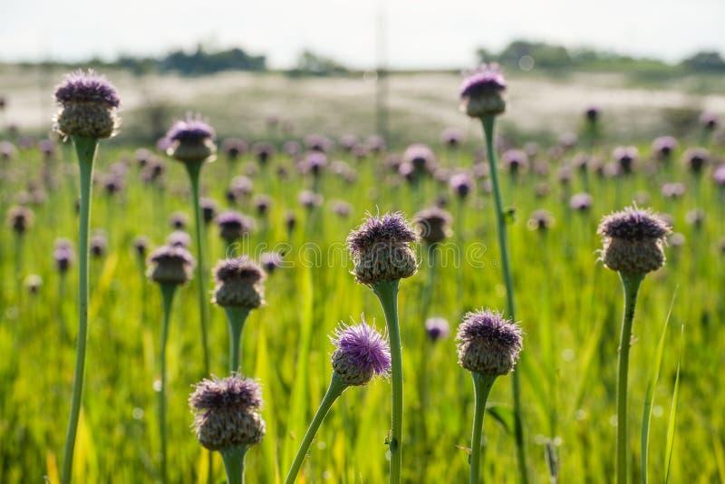 Flores do verão no prado imagem de stock