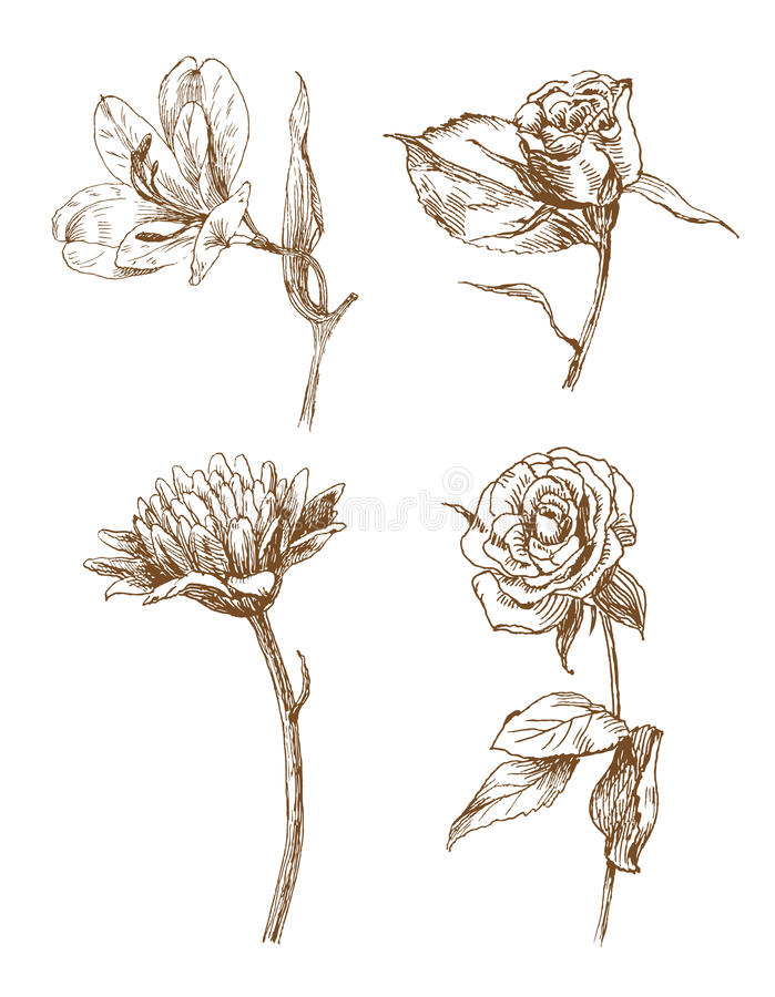 Flores do vetor ilustração royalty free
