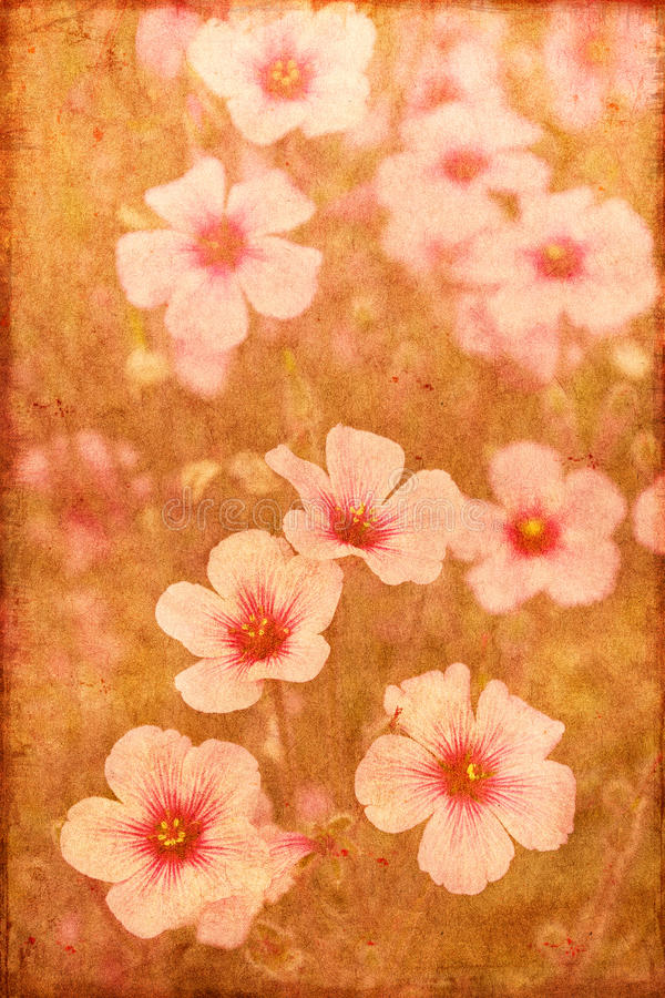 Flores do vintage fotos de stock royalty free