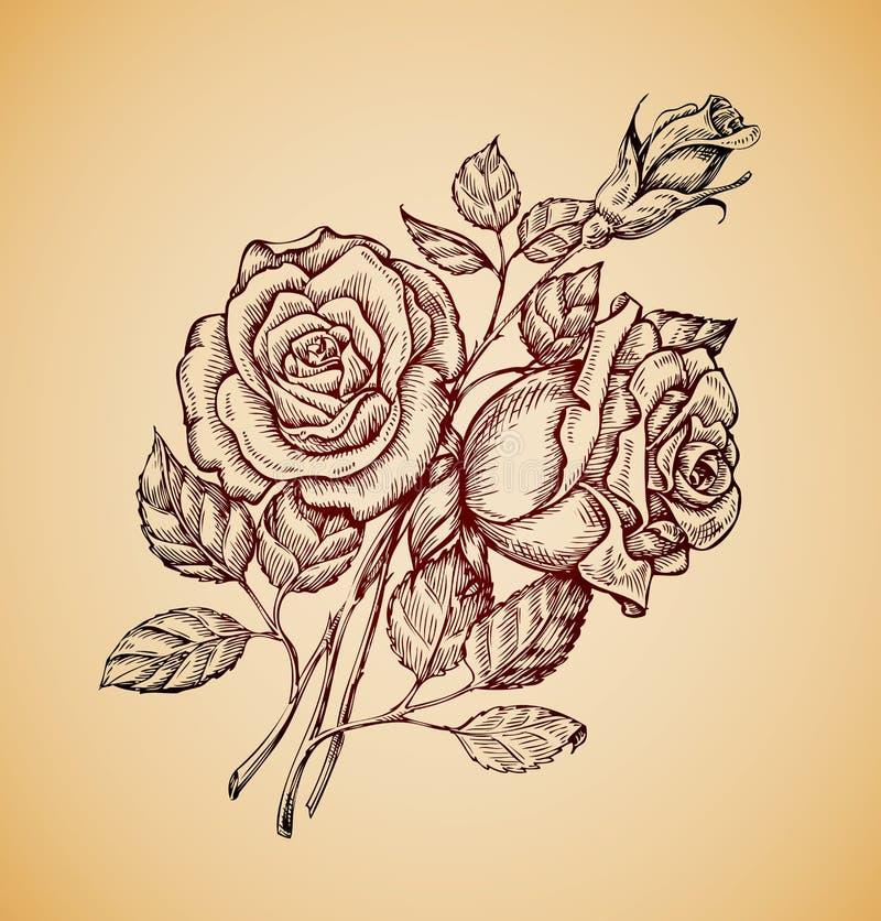 Flores do vintage A flor retro tirada mão do esboço aumentou Ilustração do vetor ilustração do vetor