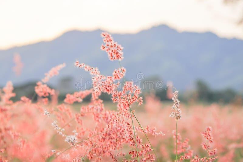 Flores doces fotografia de stock