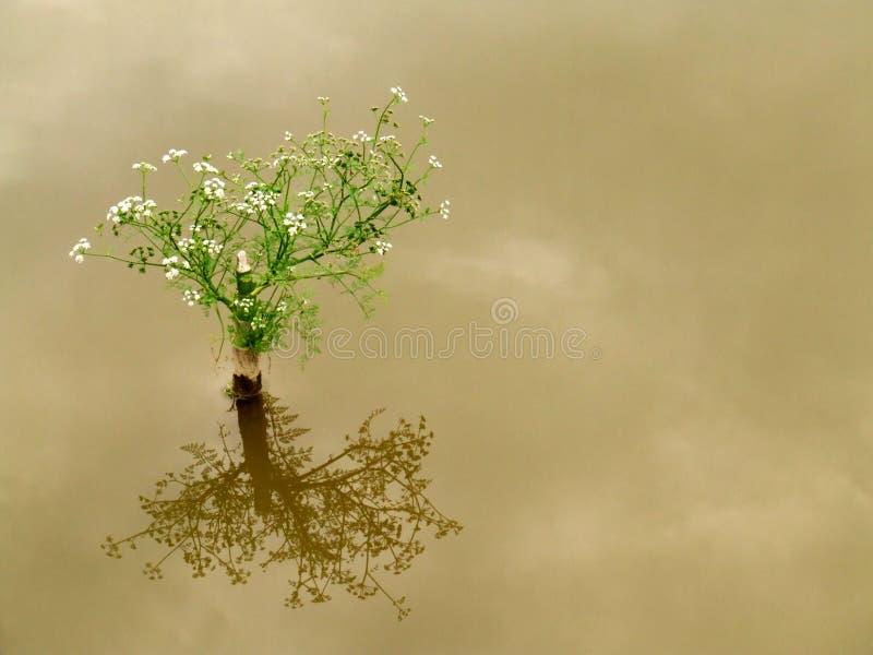 Flores dos bonsais fotos de stock