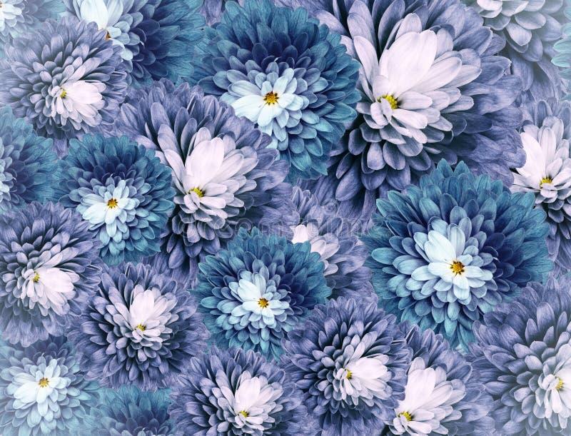 Flores dos cris?ntemos fundo Azul-branco colagem floral Composi??o da flor Close-up fotografia de stock royalty free