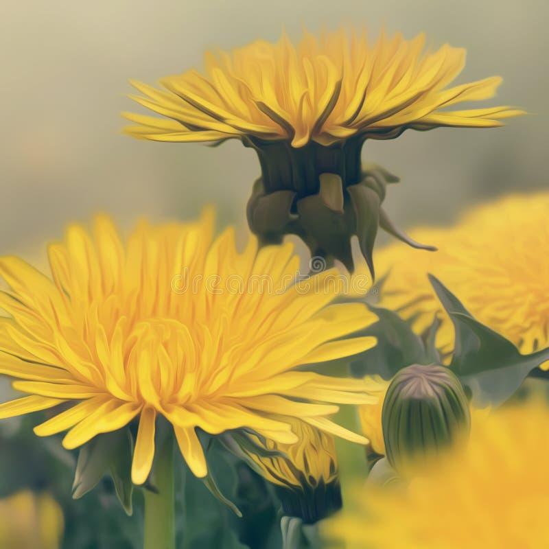 Flores dos dentes-de-leão da mola ilustração do vetor