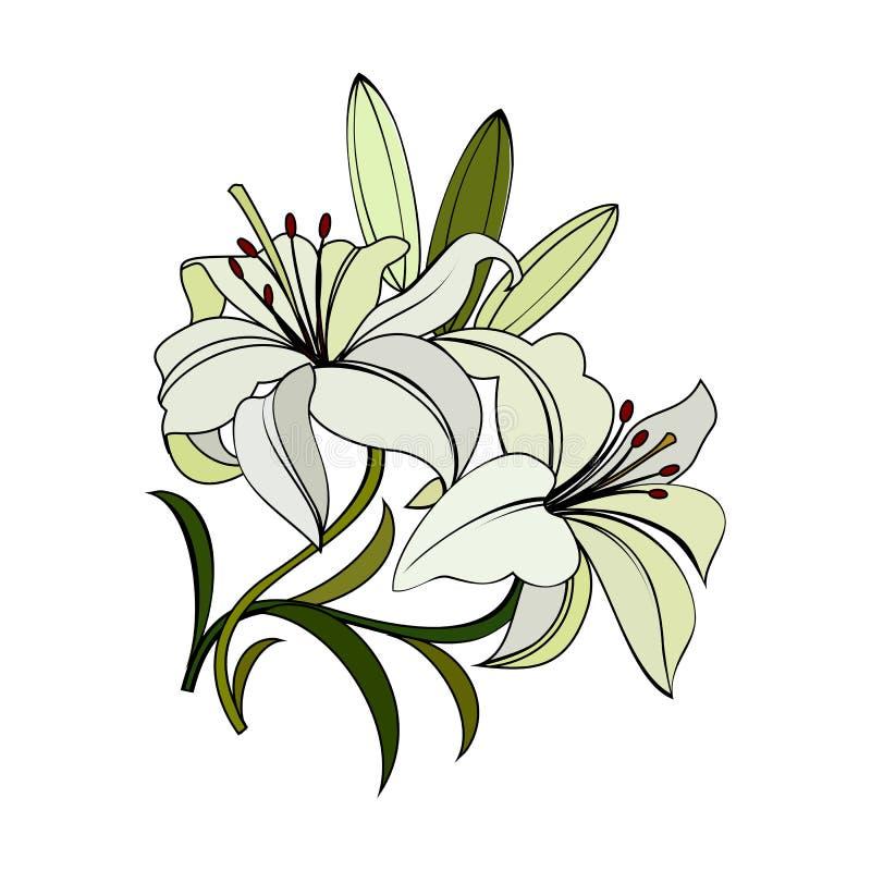 Flores dos lírios brancos ilustração stock
