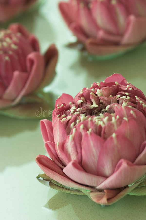 Flores dos termas imagens de stock