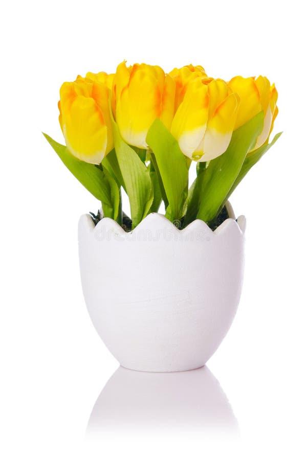 Flores dos Tulips fotografia de stock royalty free