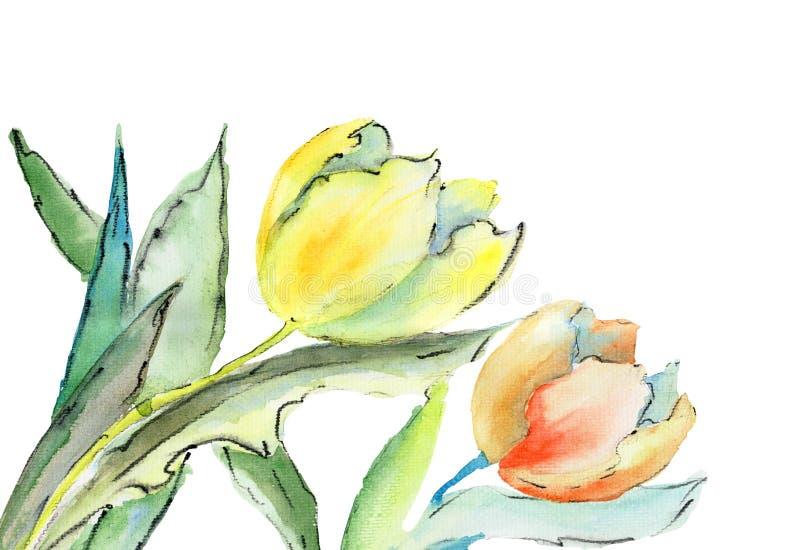 Flores Dos Tulips Fotos de Stock Royalty Free