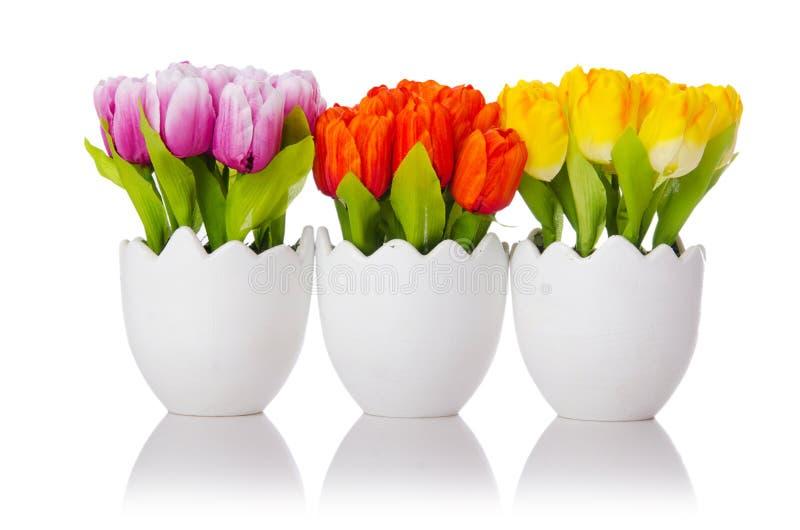 Flores dos Tulips no branco fotos de stock