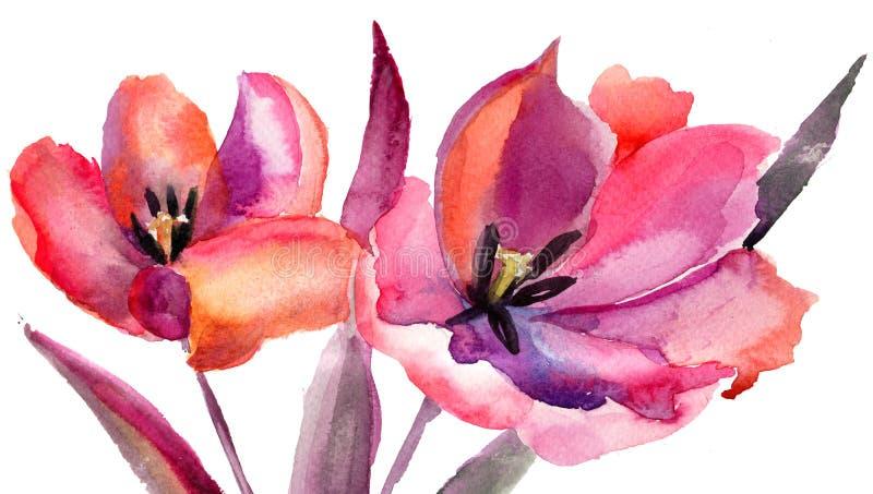 Flores dos Tulips, pintura da aguarela ilustração stock