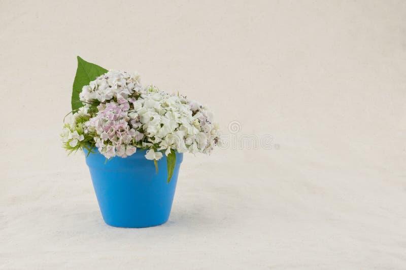 Flores dulces blancas de Guillermo fotografía de archivo