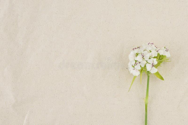 Flores dulces blancas de Guillermo imágenes de archivo libres de regalías